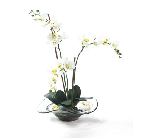 Picture of WHITE ORCHID