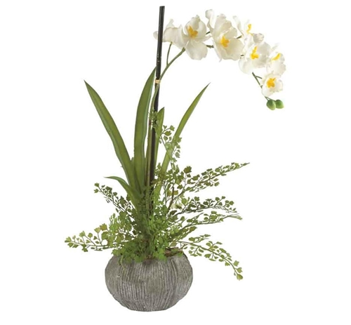 Picture of CREAM ORCHID