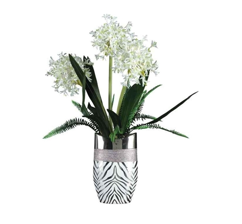 Picture of WHITE STARFIRE ALLIUMS