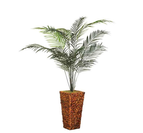 Picture of ARECA PALM TREE