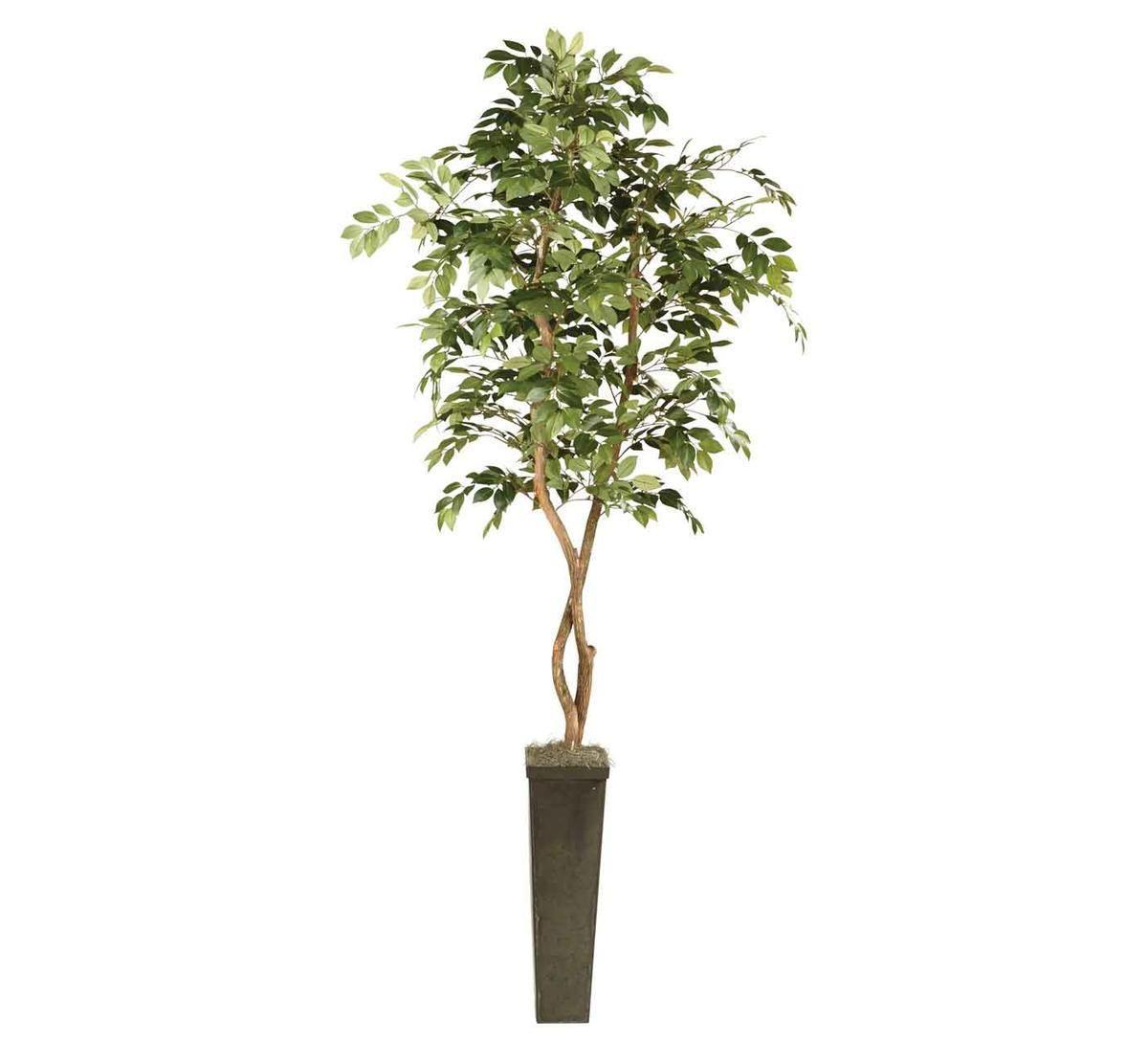 Picture of SAKAI TREE