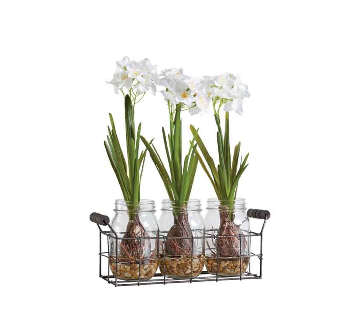 Picture of PAPER WHITES