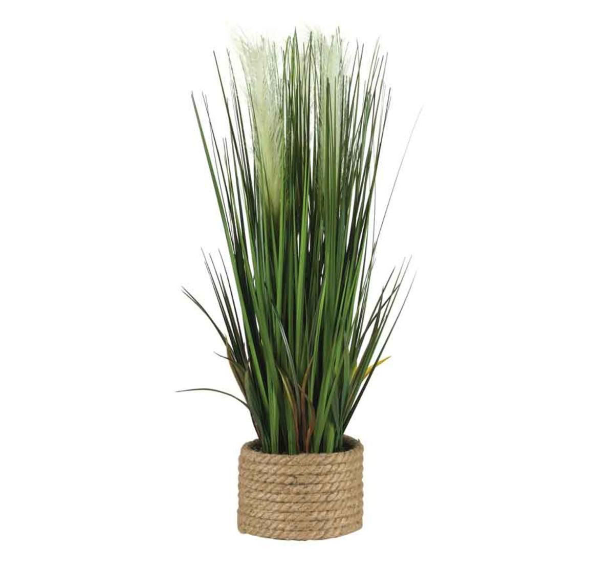 Picture of ONION GRASS