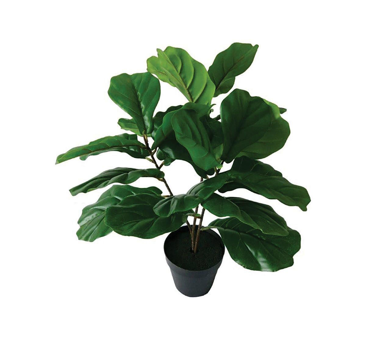 Picture of FIDDLE LEAF TREE