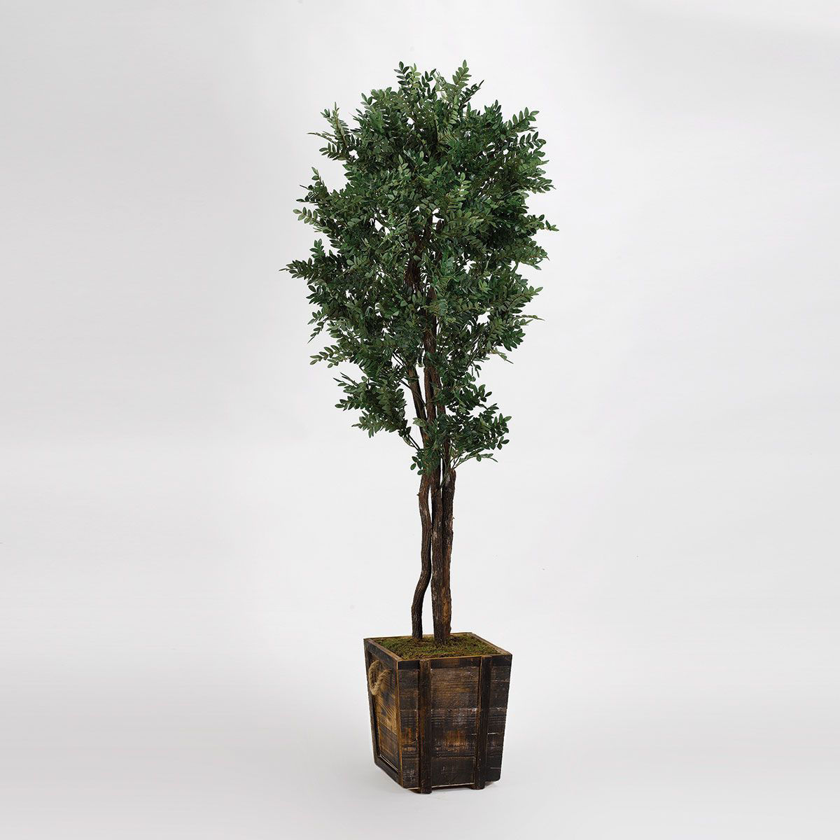 Picture of OLIVE TREE