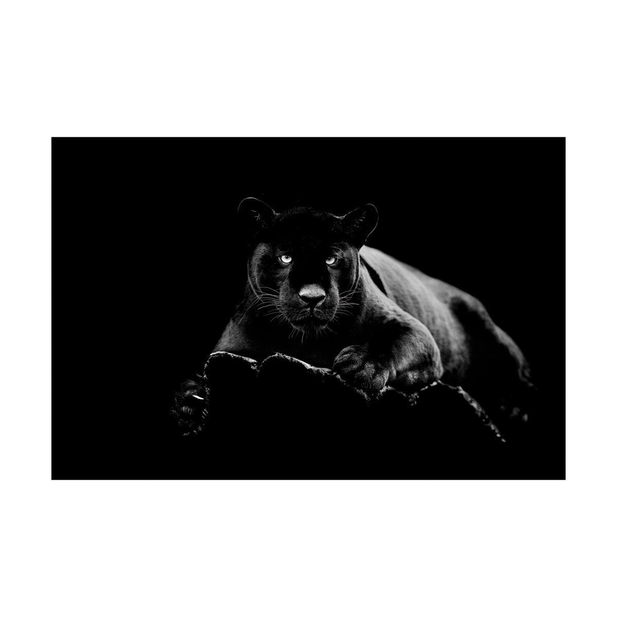 Picture of WALL ART PANTHER